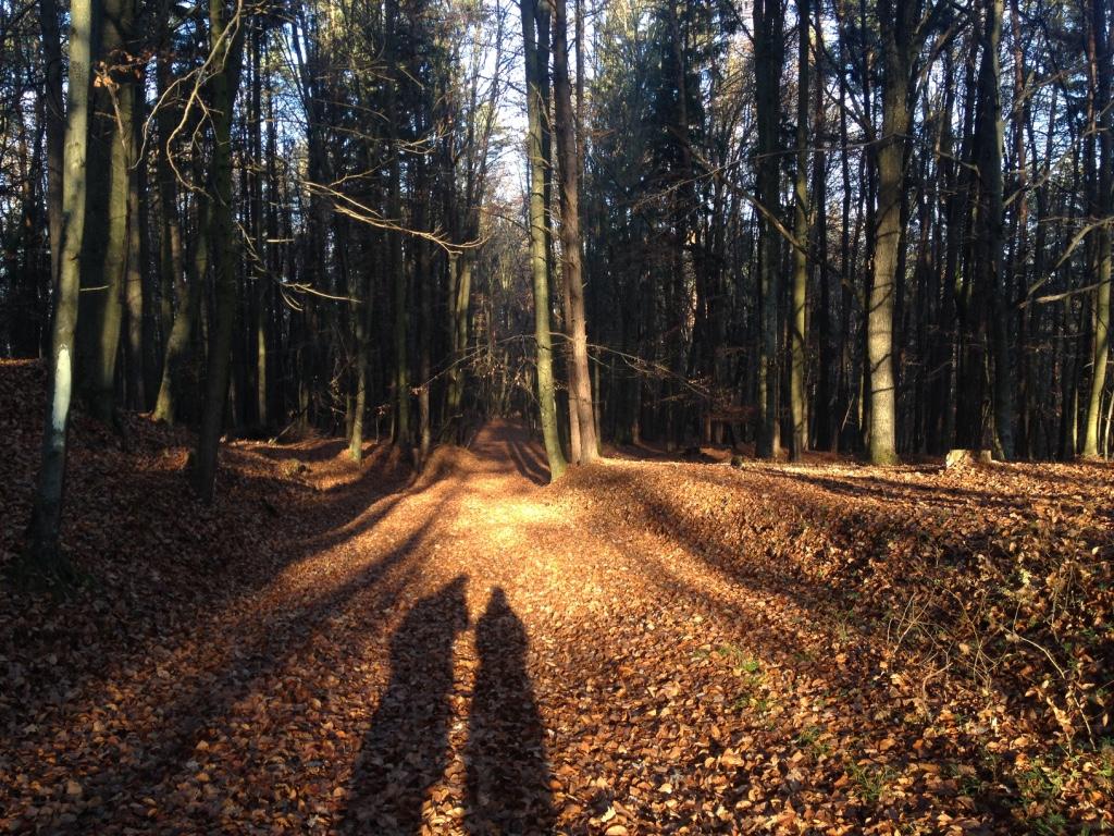 Was ist Achtsamkeit, Wiener Wald